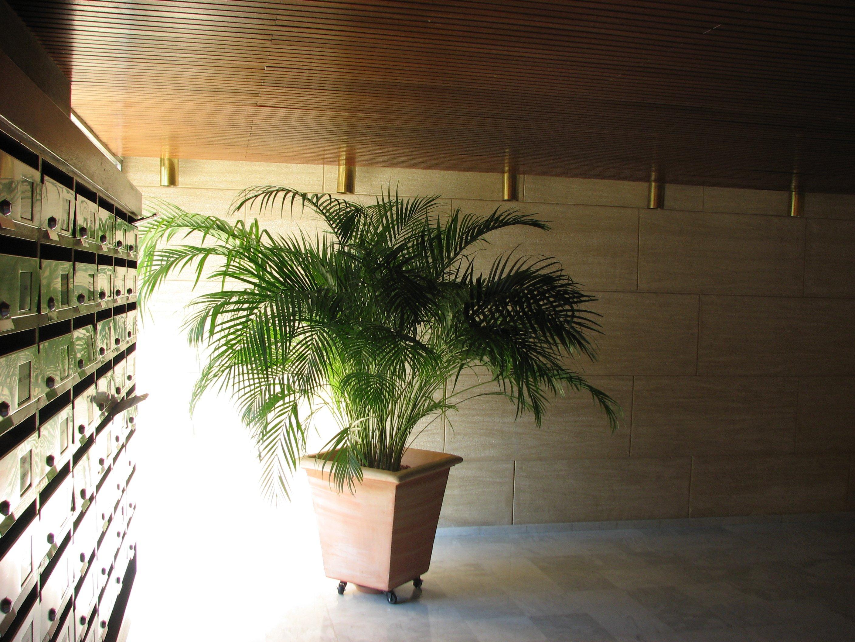 Palmier dans le bât. B